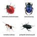 gra edukacyjna memo owady